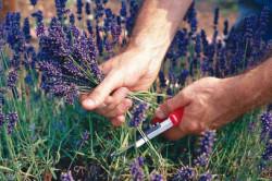 Сбор трав для лечения почек