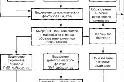 Развитие пиелонефрита