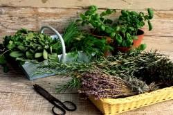 Сбор лекарственных трав для лечения камней в почках